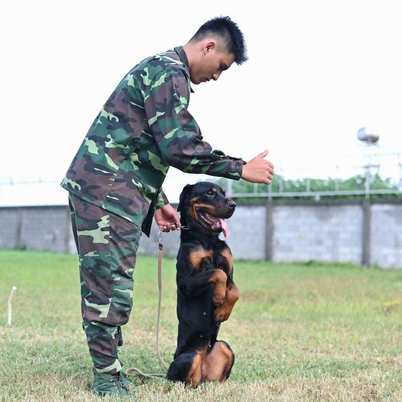 trung tâm huấn luyện chó tphcm