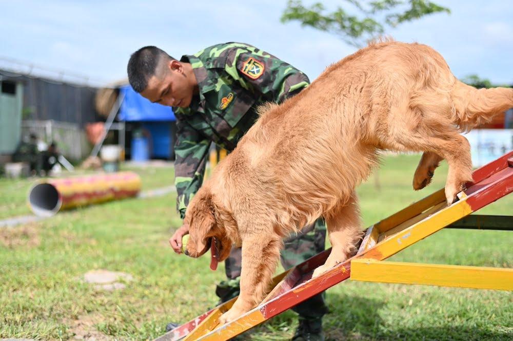 trường huấn luyện chó Thiên Khuyển