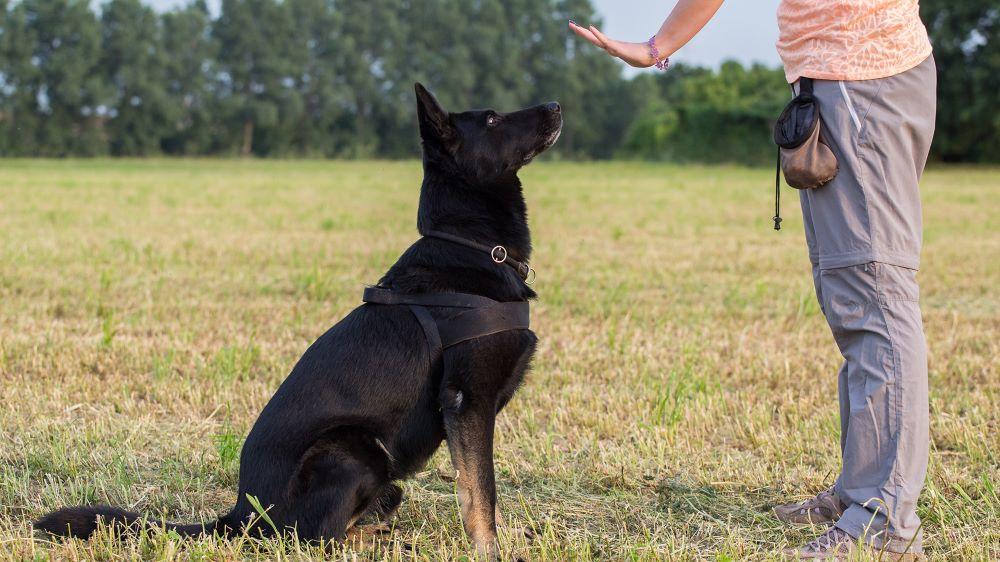 Cách huấn luyện chó ở nhà