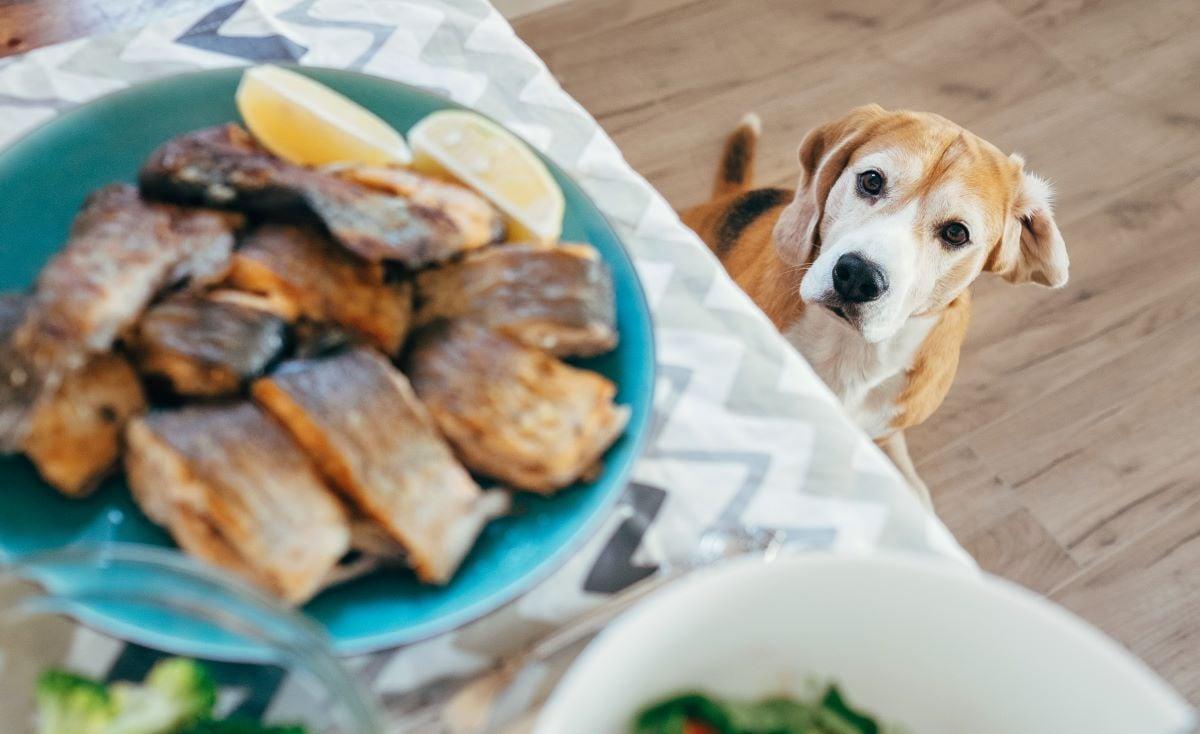 dạy chó không ăn đồ ăn lạ