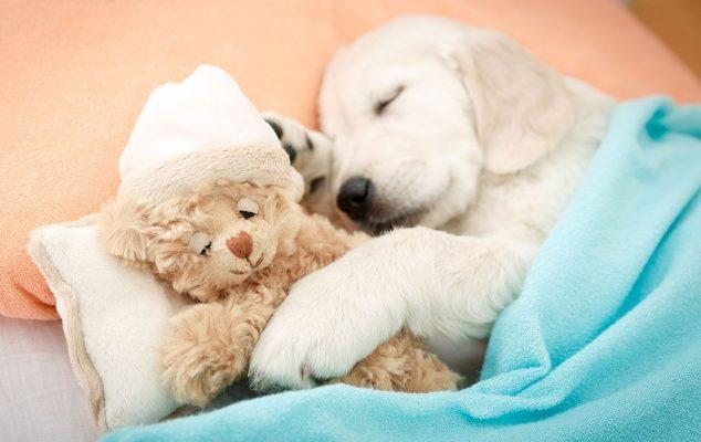 Giấc ngủ của chó